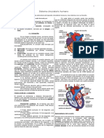 Circulatorio humano