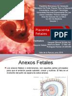 Anexos Fetales y Placenta Seminario 8