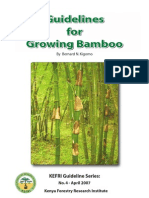 Guidelines for Growing Bamboo