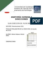 Guía de Disección Plexo Braquial, axila.