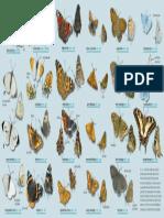 vlinderzoekkaart