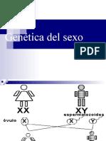 genetica_del_sexo-09.ppt