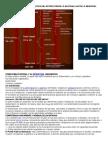 Nueva Estructura Politica Del Estado Desde Lo Nacional Hasta Lo Municipal