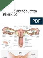 Aparato reproductor femenino.pptx