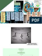 Trabajos Psiconeuroinmunoendocrinología