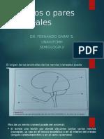 Nervios o Pares Craneales Semiologia II