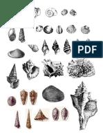 Copia de Fosiles Blanco y Negro