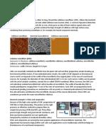 Nano Cellulose s