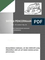 SISTEM PENCERNAAN (Evi Aslli).pptx