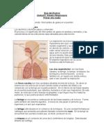 Guía del Alumno sistema respiartorio