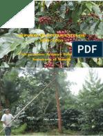 Informe de Inteligencia de Mercado Del Café_2012