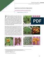 Alimentos_nativos_peruanos.pdf