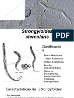 Strongyloides Stercolaris EXPO
