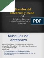 42.- Músculos Del Antebrazo y Mano