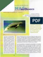 El Llano venezolano y su tonina, el delfin rosado del río, Inia geoffrensis (de Blainville 1817)