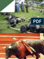 Etica en La Experimentacion Con Animales en Psicologia