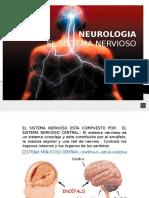 Diapos Sistema Nervioso