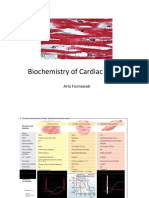 Biochemistry of Cardiac Muscle