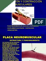 fisiol-placa-nm.ppt