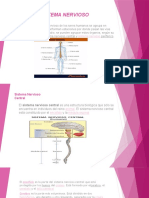 Sistema Nervioso Original