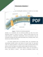 Trabajo- Estructuras Celulares I