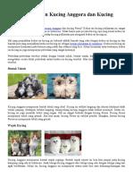 Kenali Perbedaan Kucing Anggora Dan Kucing Persia