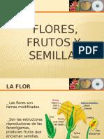 Flores, Frutos, Semillas