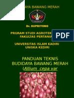 1. Panduan Budidaya Bawang Merah