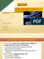 BIOLOGIA-MOLECULAR-FIN.pptx