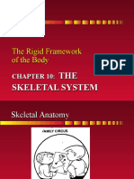 Chapter 10 The Skeletal System - sp10.ppt