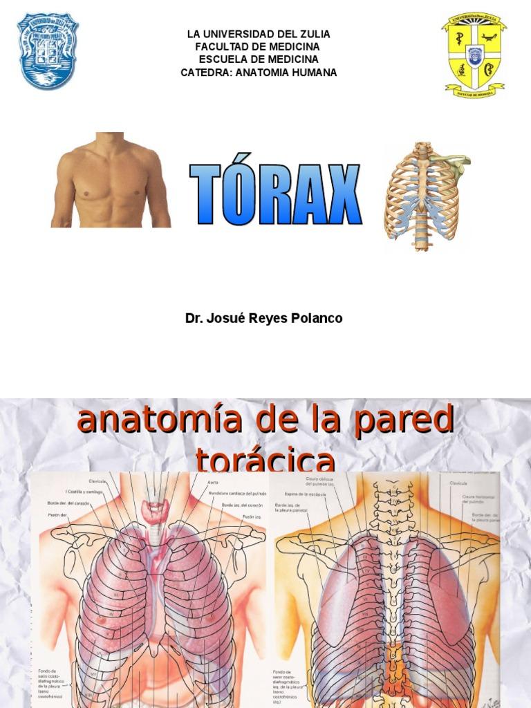 Anatomia de pared toracica.ppt