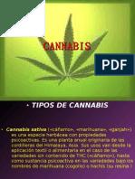 Presentación1.pptx cannabis