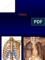 Anatomia Torax Contenido