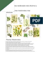Las 230 Plantas Medicinales Más Efectivas y Sus Usos