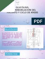 Glucólisis, Descarboxilación Del Piruvato y Ciclo De
