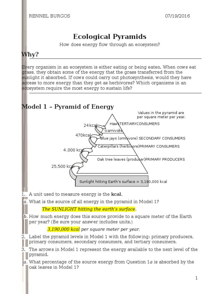 26 ecological pyramidss rennel Food Web – Energy Pyramid Worksheet