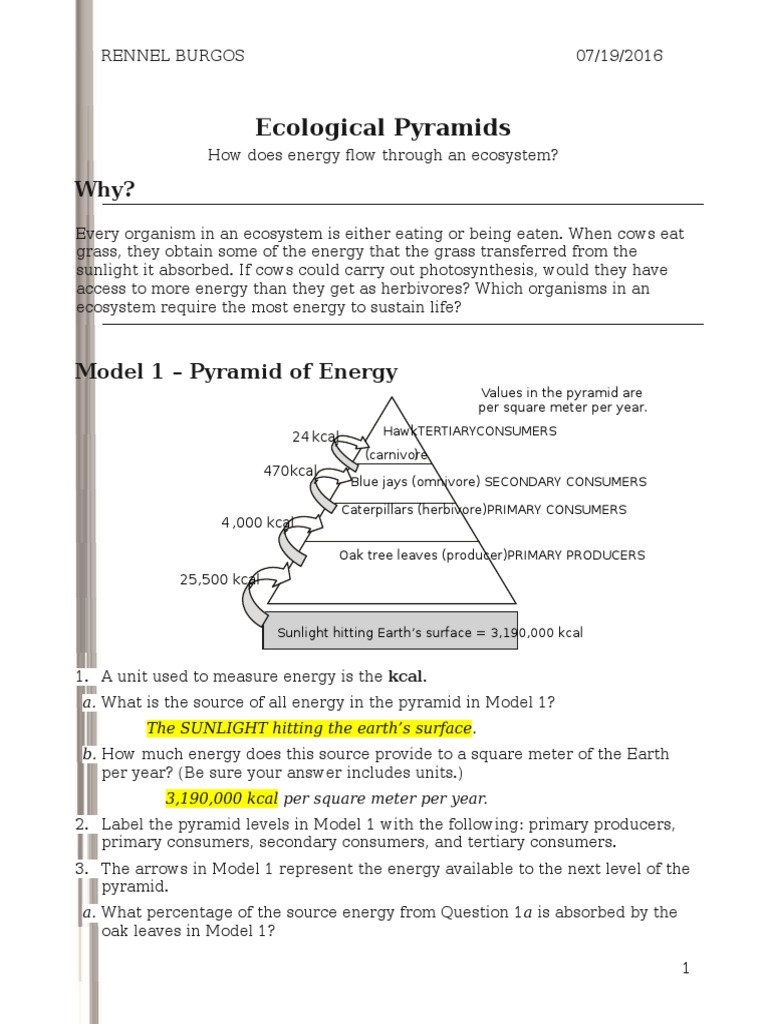 {26 ecological pyramidss rennel Food Web – Ecological Pyramids Worksheet