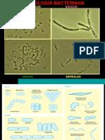 3.-Morfologia y Estructura Bacteriana