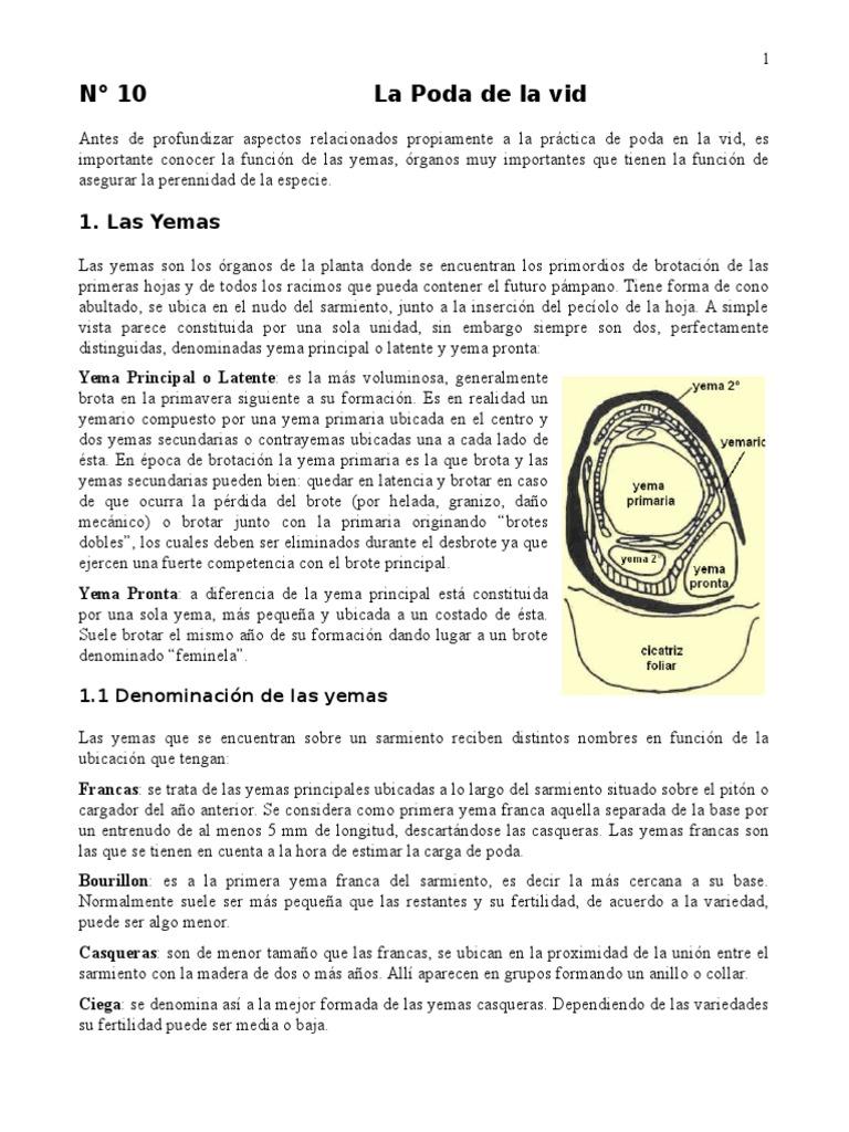 10.La Poda de La Vid