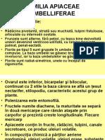 Curs 10 Apiaceae