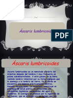 ascaris lumbricoide.pptx