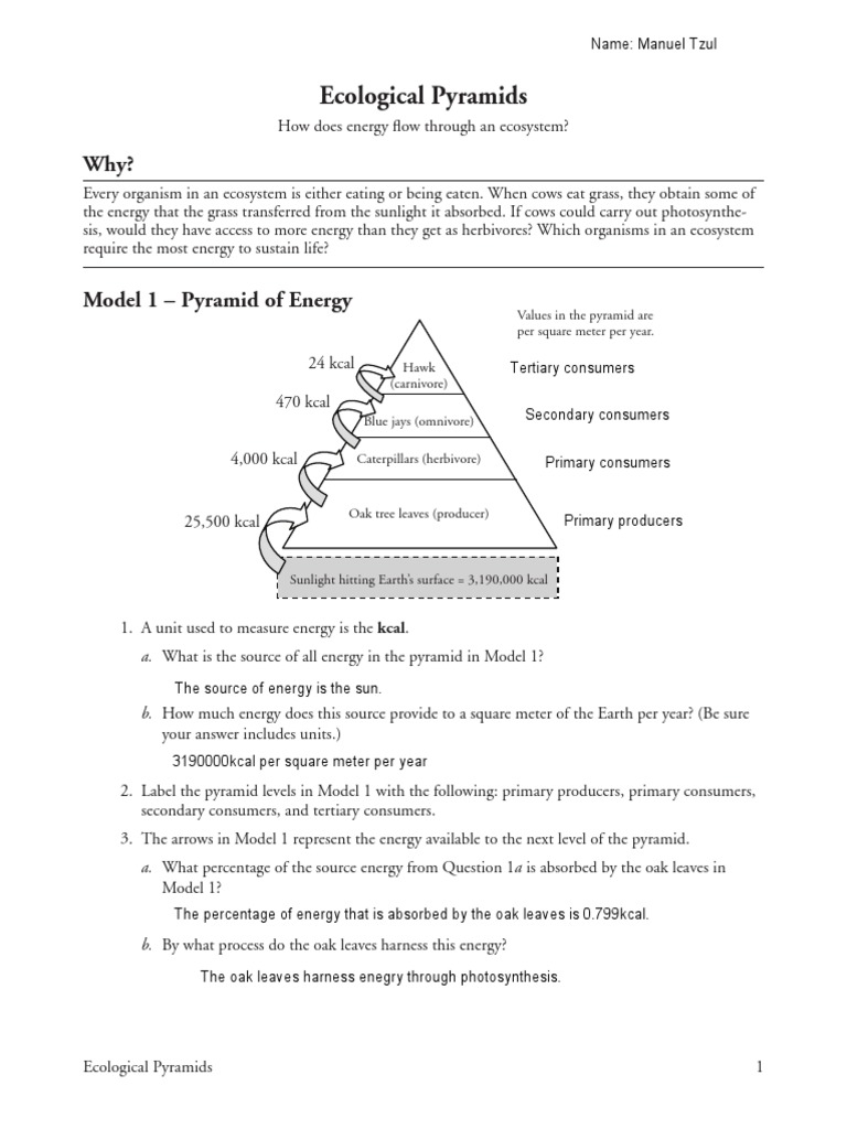 26 ecological pyramids manuel tzul Food Web – Ecology Worksheets for High School