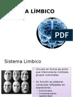 sistemalimbico-130719181312-phpapp01