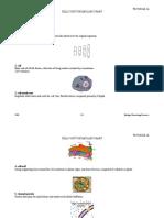 Cells Vocab Chart