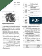 Evaluacion de Sistema Circulatorio y Linfatico Grado Noveno Iete 2016 Docente Diana Burbano