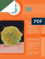 cells scidim2cb