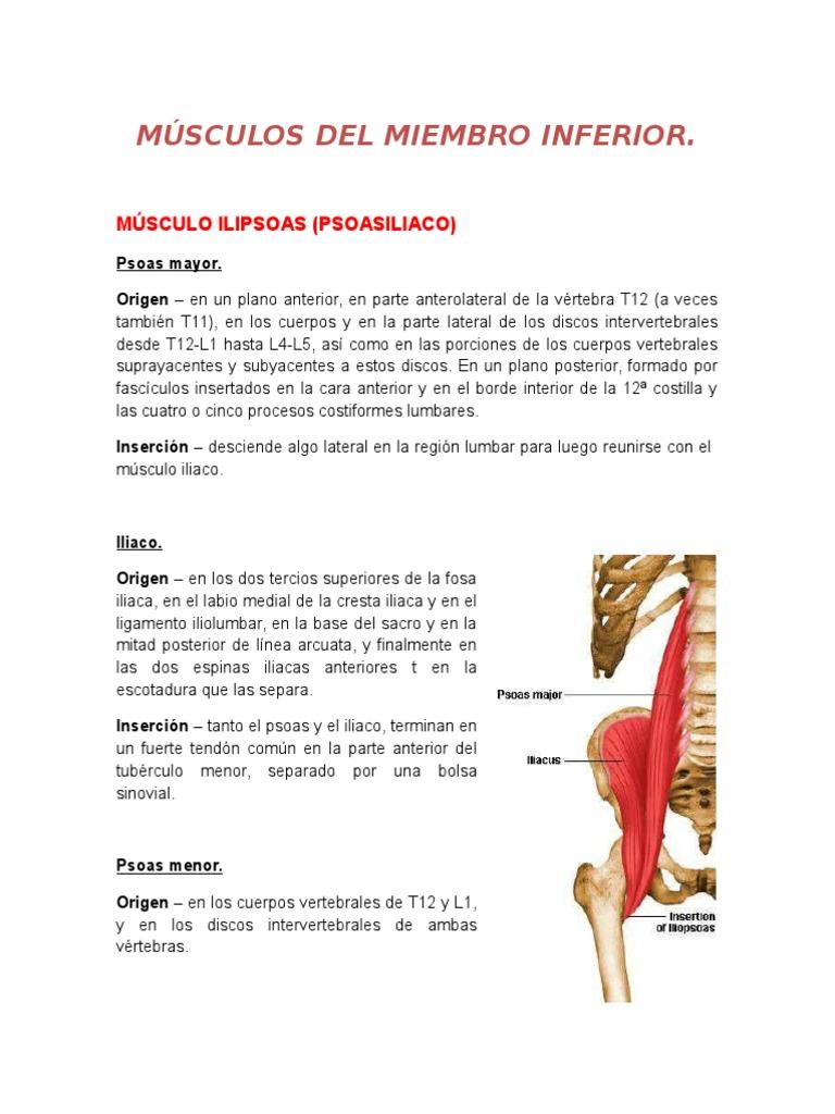 Lujoso Origen Y La Inserción De Tibial Anterior Cresta - Imágenes de ...