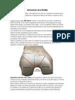 anatomia, biomecanica semiología y patologia de rodilla Lic  Sanabria Lisandro