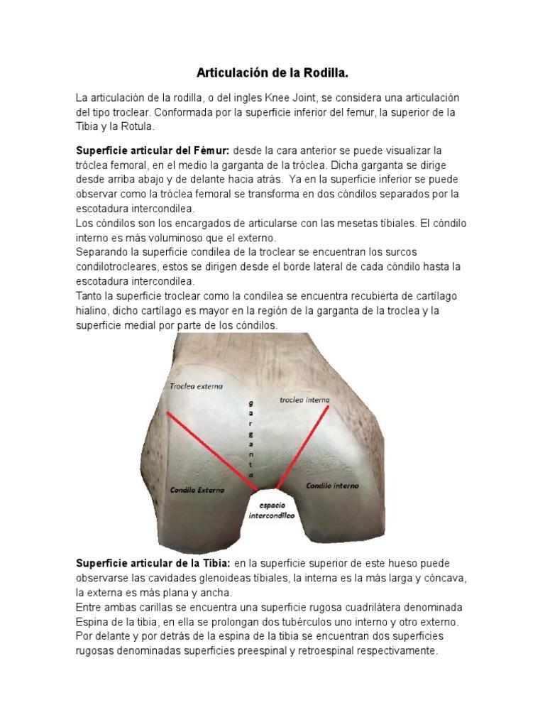 anatomia, biomecanica semiología y patologia de rodilla Lic Sanabria ...