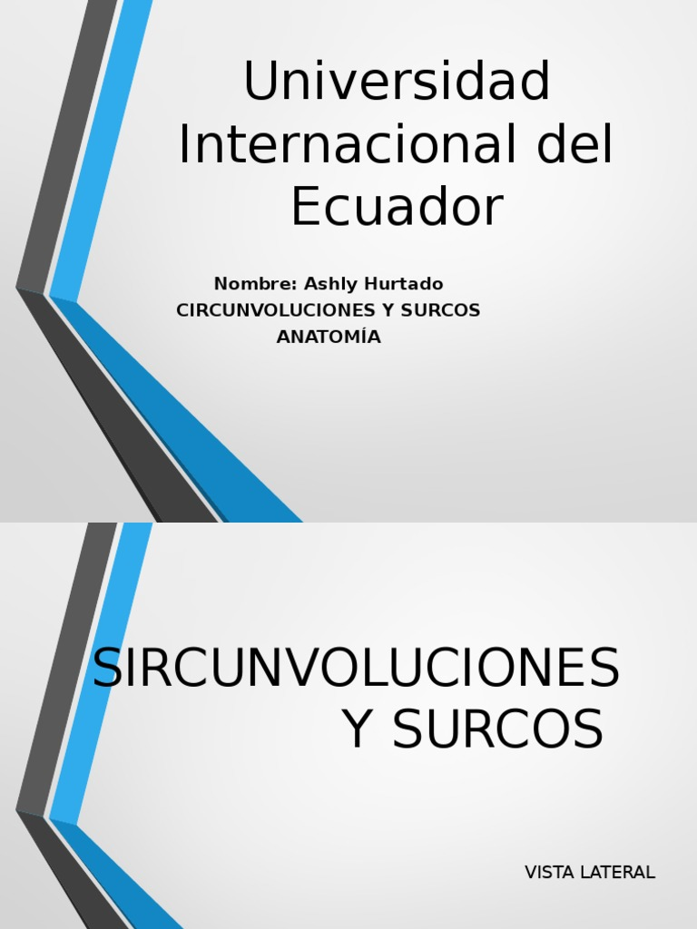 Anatomia Surcos y Circunvoluciones